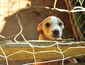 ht_rescued_pitbulls_02_jef_ss_130827_ssh